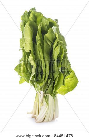 Bunch Of Chard Isolated On White Background
