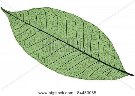 Silhouette Of Green Cherry Leaf, Isolated On White Background