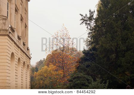 Building And Tree