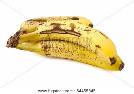 Overripe and rotten bananas on white background