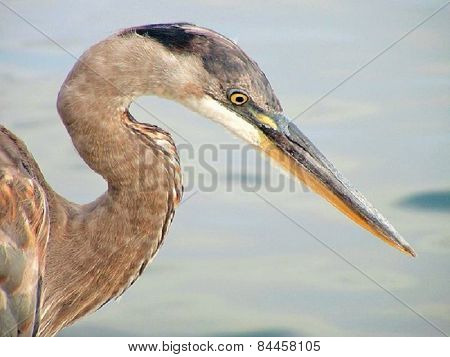 Seabird Profile