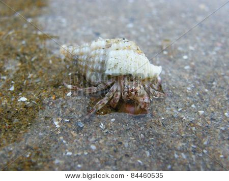 Hermit crab a little cute in Sea world got