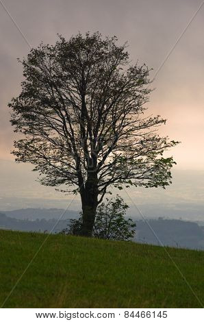Tree on a hill just before a quick summer storm at Rajac