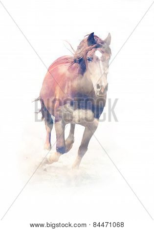 Horse. Double Exposure