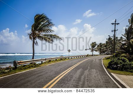 Big Palm Tree On The Side Of The Road