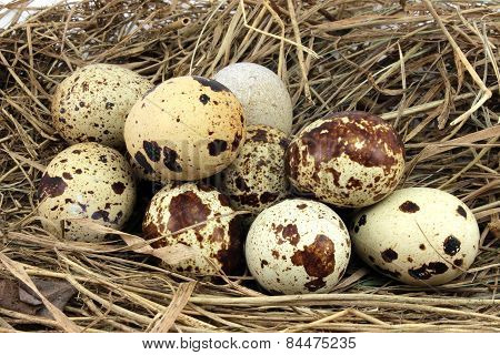 Brown Speckled Eggs