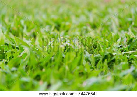 Soft focus, fresh green grass, warm sun light on the meadow