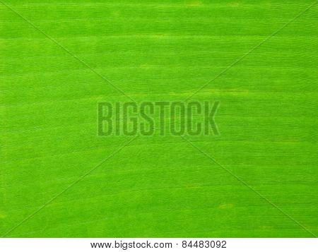 The Green Banana Leaf