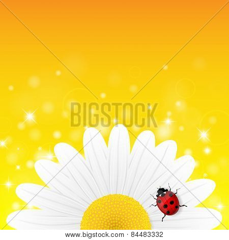 Chamomile flower and ladybird on yellow background.