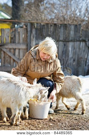 elderly woman feeding goats at the farm