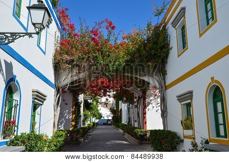 Colorful Alley Blossom At Gran Canaria, Spain