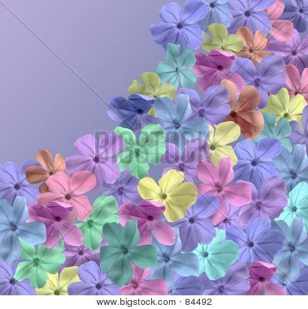Blossom Field