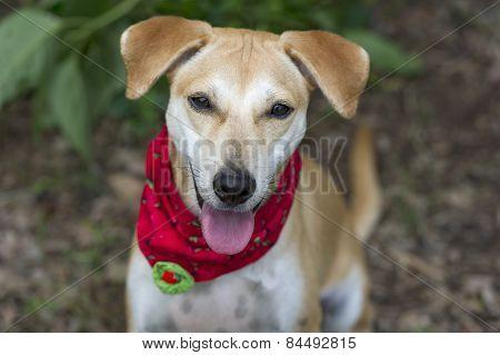 Happy Cute Dog