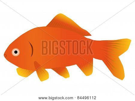 An illustration of a goldfish