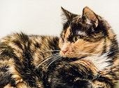 pic of domestic cat  - An Old Domestic Cat Lies Near The Wall - JPG