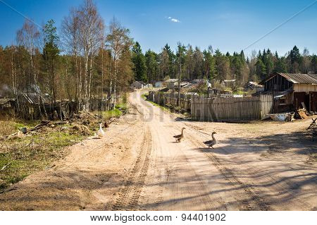 Geese on a rural road