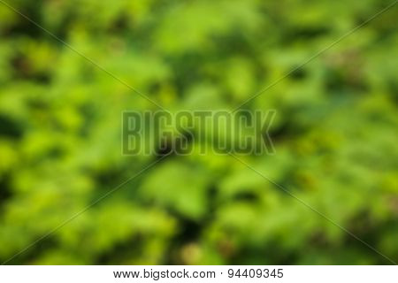 green abstract bokeh, green background, blurred tree