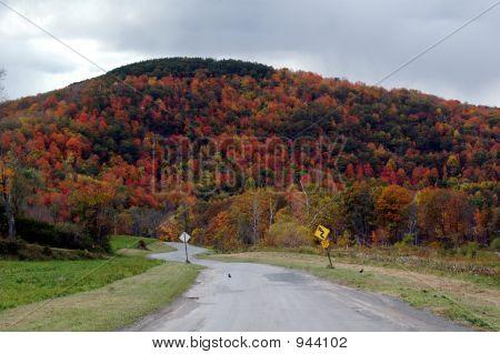 Follaje de otoño 30