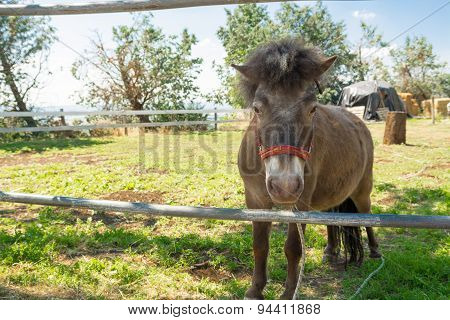 The Horse Pony In The Paddock
