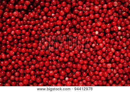 Red cowberries, food background