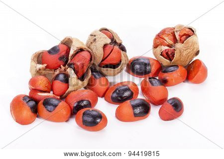 Bright Red Seeds And Burst Pods Of Natal Mahogany Tree