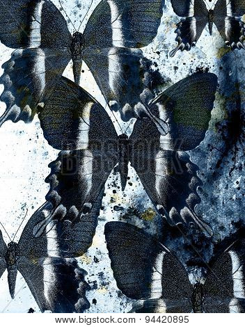 Abstract Background With Blue Butterfly Collage.