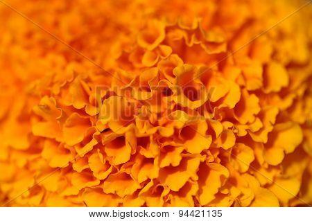 Coloured Orange Flower