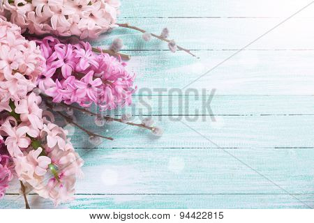 Background With  Hyacinths  And Willow Branches