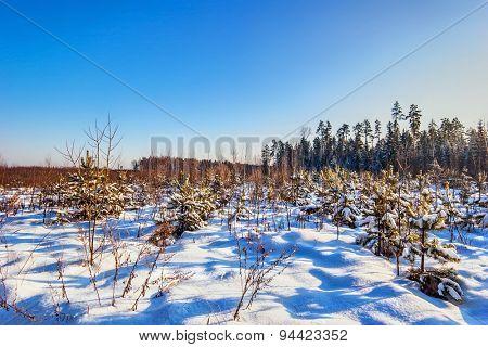 Winter field under blue sky. Nature background