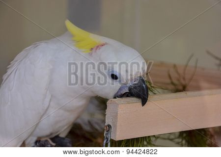 Parrot Tropical Bird