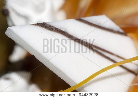 Vanilla Cake With Decorations