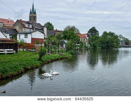 Telc Swans