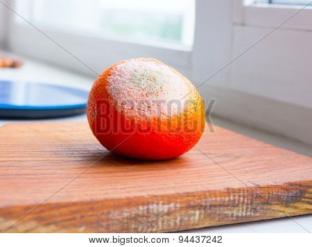 Orange fruit rotten on a colored background.