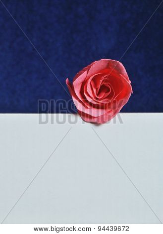 pink rose on white and blue background