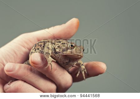 Holding Toad