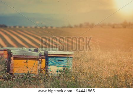 Beehives On The Sunflower Field In Provence, France