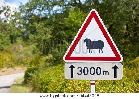 Traffic Sign Warning Of Sheep On The Road