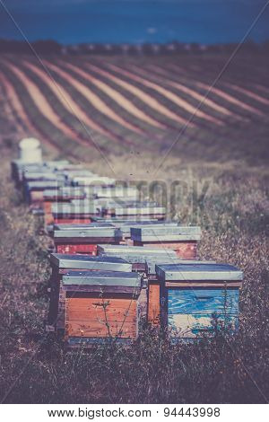 Beehives On The Field In Provence, France