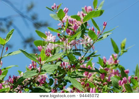 Spring bush with pink  flowers nature background