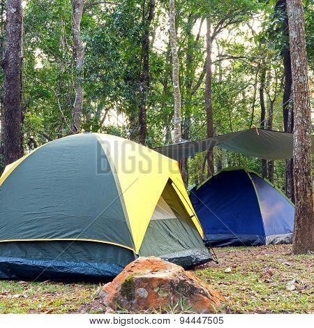 Big dome and camping tents underneath big trees in national park.