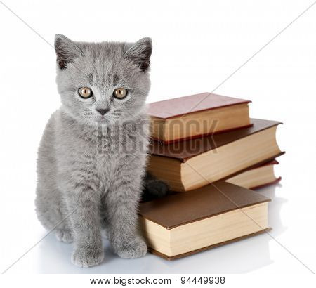 Cute gray kitten with stack of books isolated on white