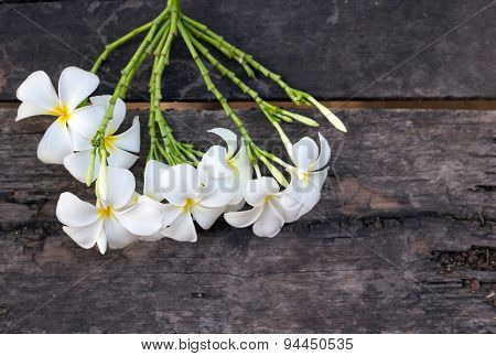 White And Yellow Plumeria Spp. (frangipani Flowers, Frangipani, Pagoda Tree Or Temple Tree) On Old W