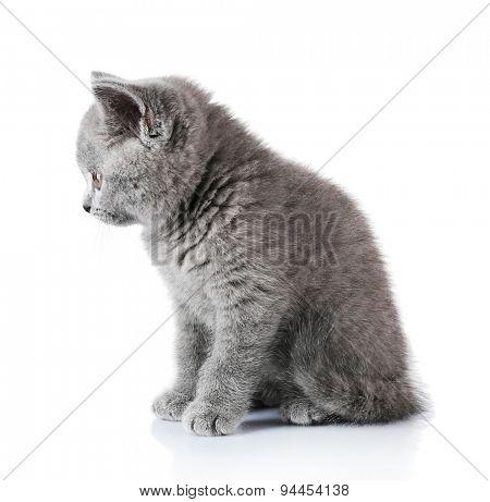 Cute gray kitten isolated on white