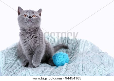Cute gray kitten with skein of thread on plaid isolated on white
