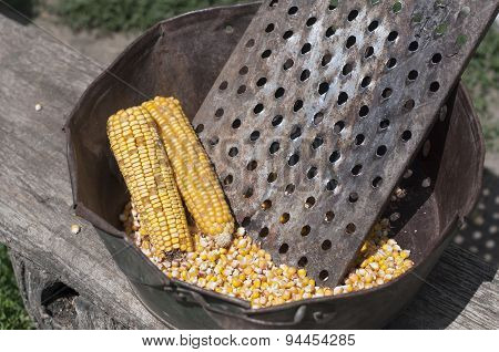 Raw Golden Corncob