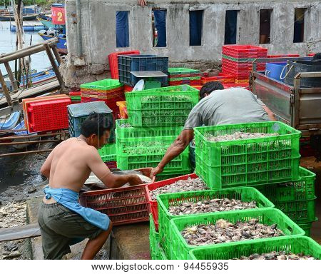 People Working At A Wholesale Fish Market