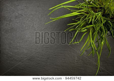 Chives plant on slate background, top view with copy space