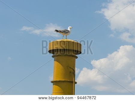 Herring Gull Perched On Ships Funnel