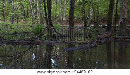 Swampy Forest