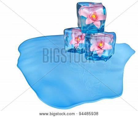 Ice Cubes With Flowers And Air Bubbles